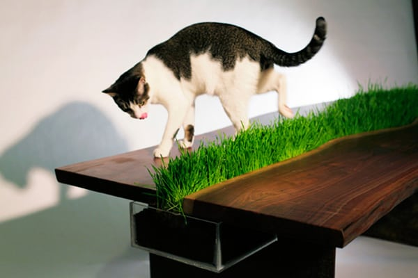 featured posts image for Innovative design that's cat friendly!