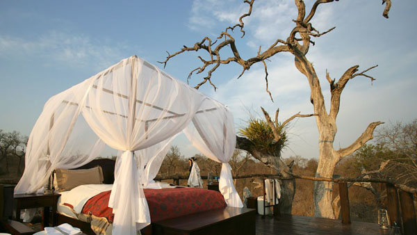 featured posts image for Ultra luxurious Lion Sands Ivory Lodge