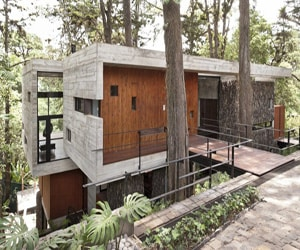 featured posts image for Trees growing through Guatemalan house