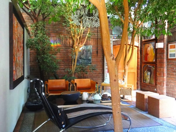 featured posts image for Trees interacting with living space in Chilean home