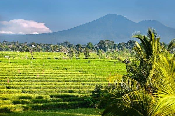 Villa Mana-Bali-36-1 Kindesign