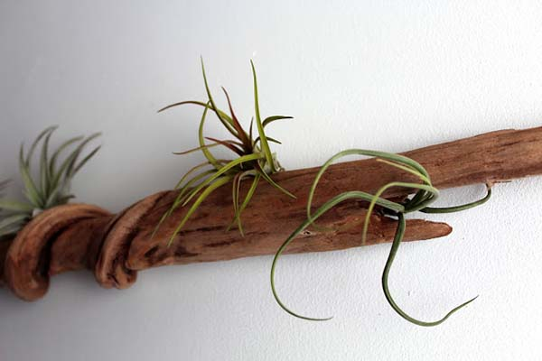 Ideas for Driftwood in Home Decor-48-1 Kindesign