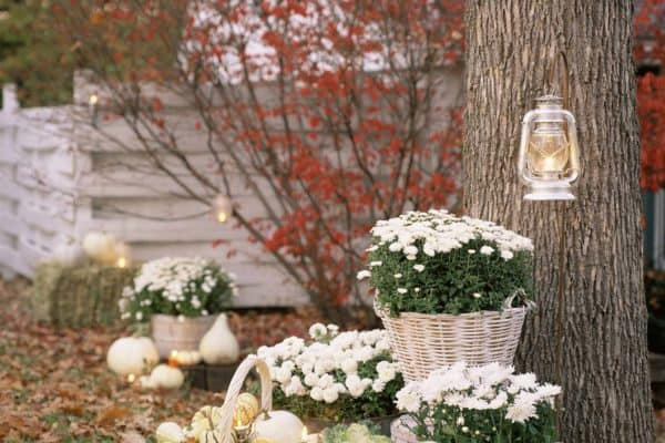 featured posts image for 31 Amazing fall decorating ideas using white pumpkins