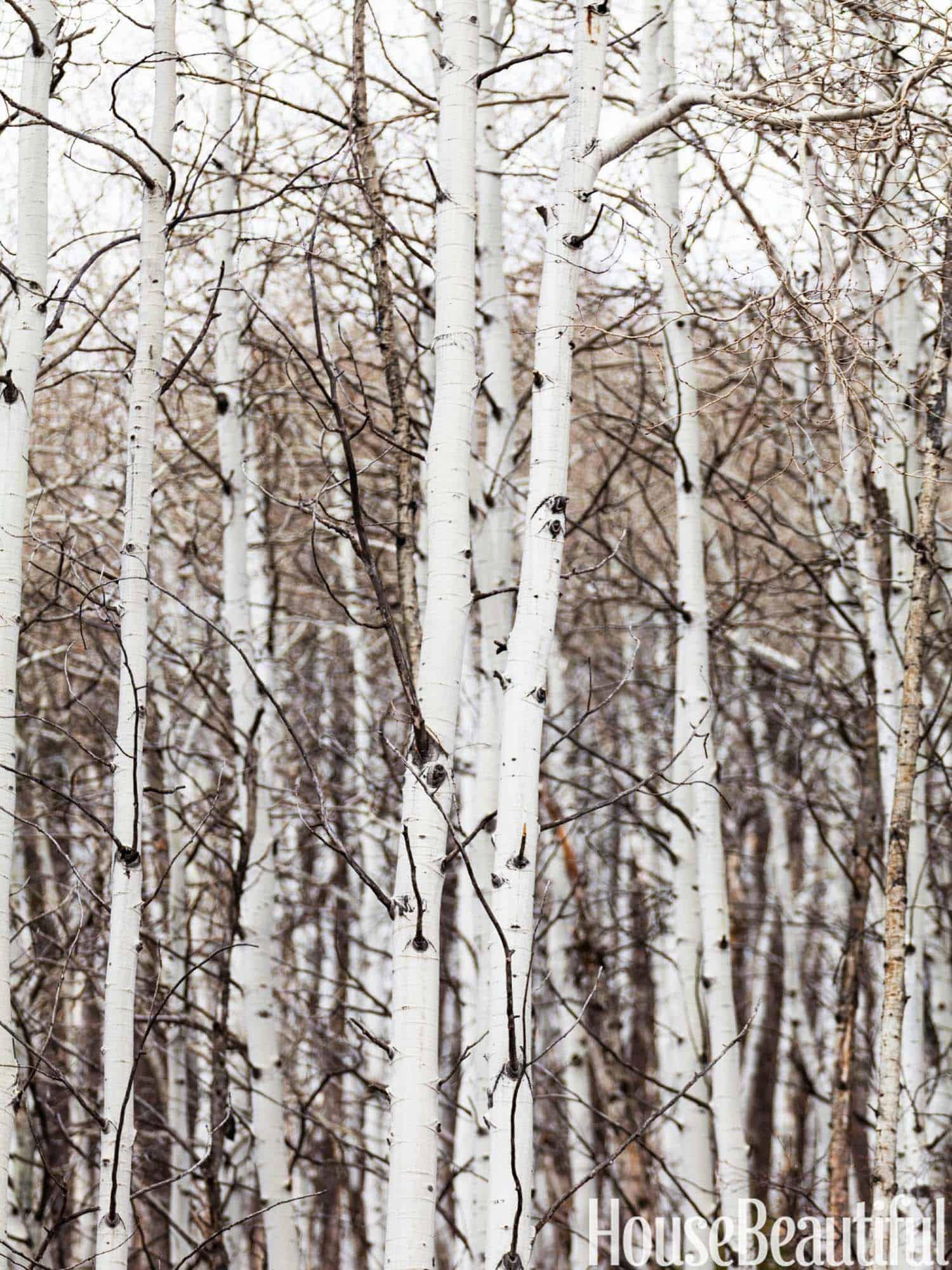 Rustic Log Cabin-Thom Filicia-05-1 Kindesign