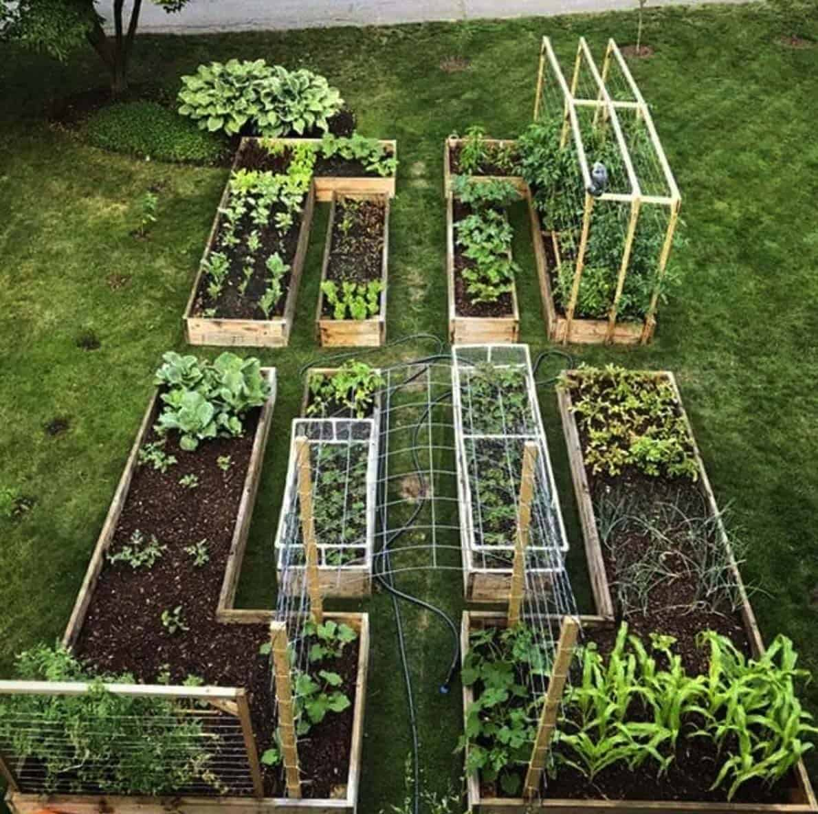 Home Garden Design Ideas India: 30 Amazing Ideas For Growing A Vegetable Garden In Your