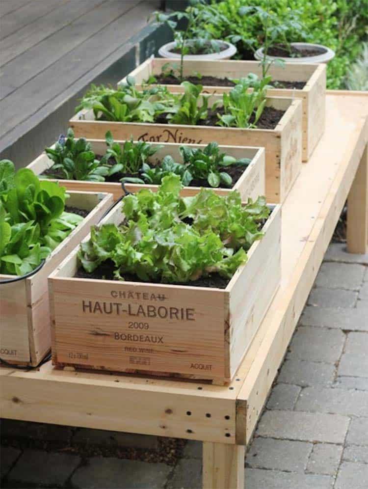 inspiring-vegetable-garden-ideas-wine-crate-leafy-greens