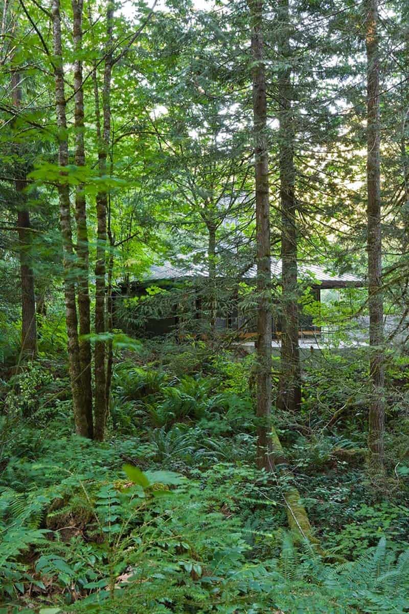 compact-modern-cabin-landscape