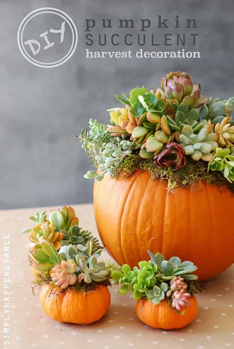 thanksgiving-decor-ideas-pumpkin-succulents