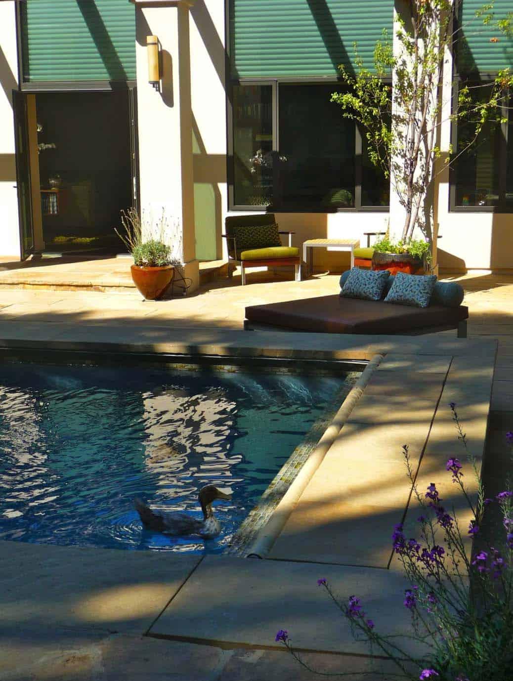 mid-century-modern-ranch-pool