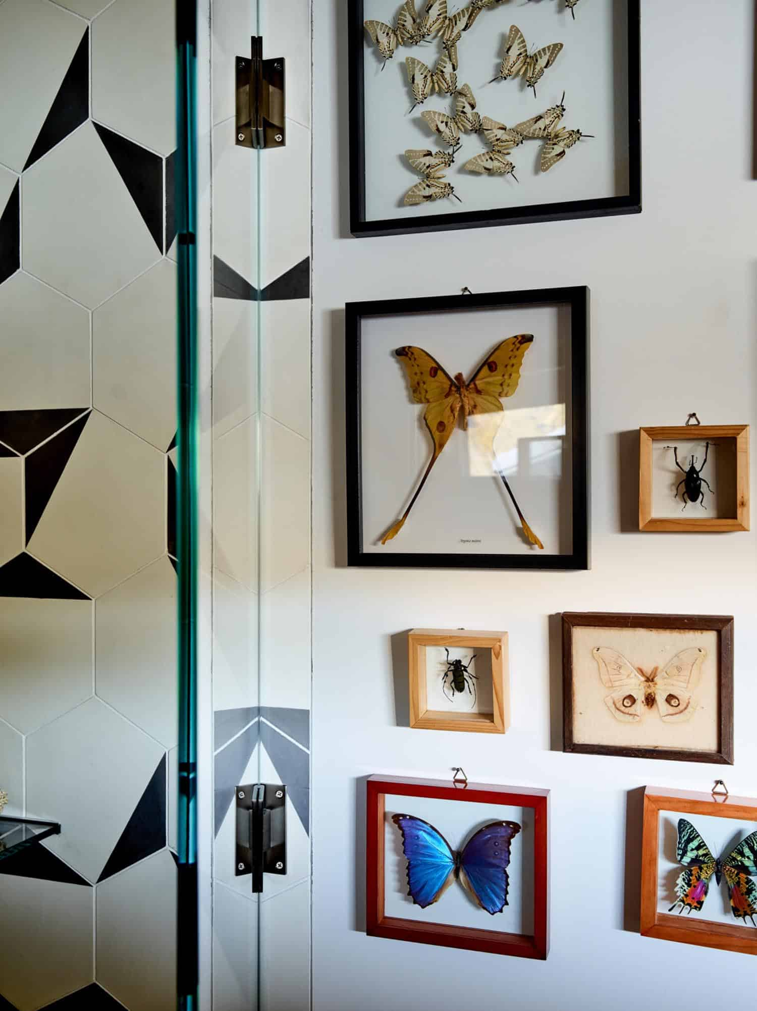 modern-guest-bathroom-wall-butterfly-collection