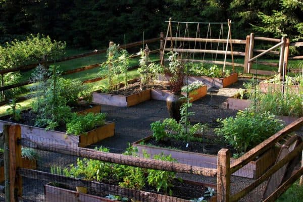 featured posts image for 20+ Creative And Inspiring Raised Bed Vegetable Garden Ideas