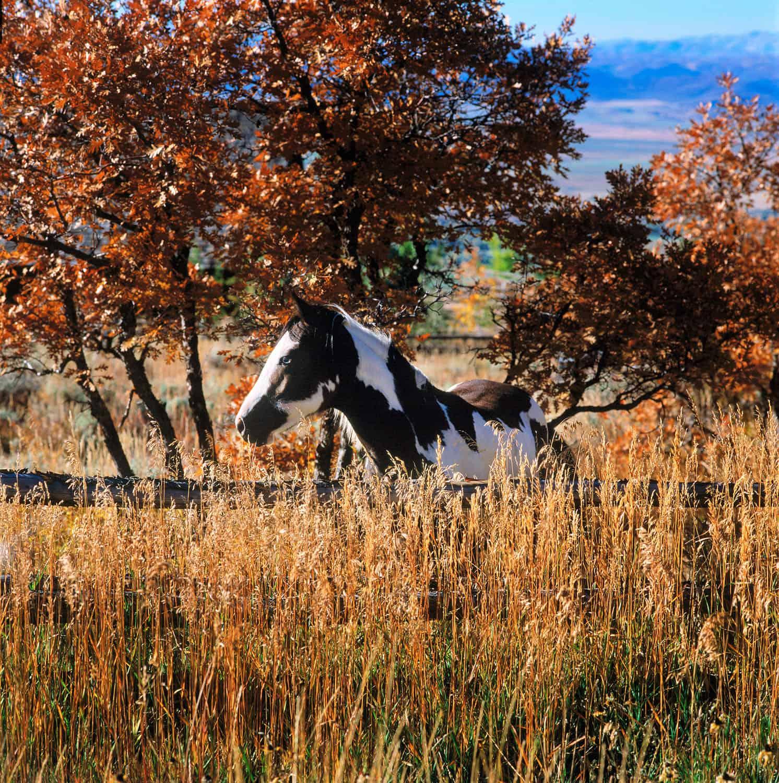 landscape-horse-in-pasture