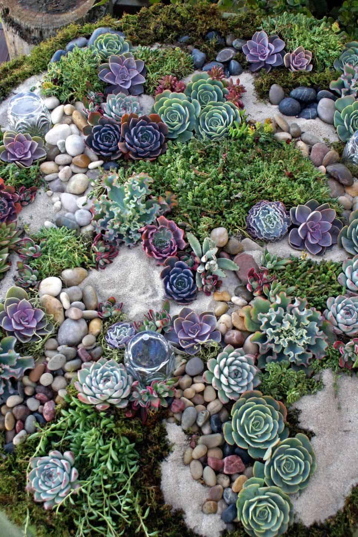 succulent-rock-garden