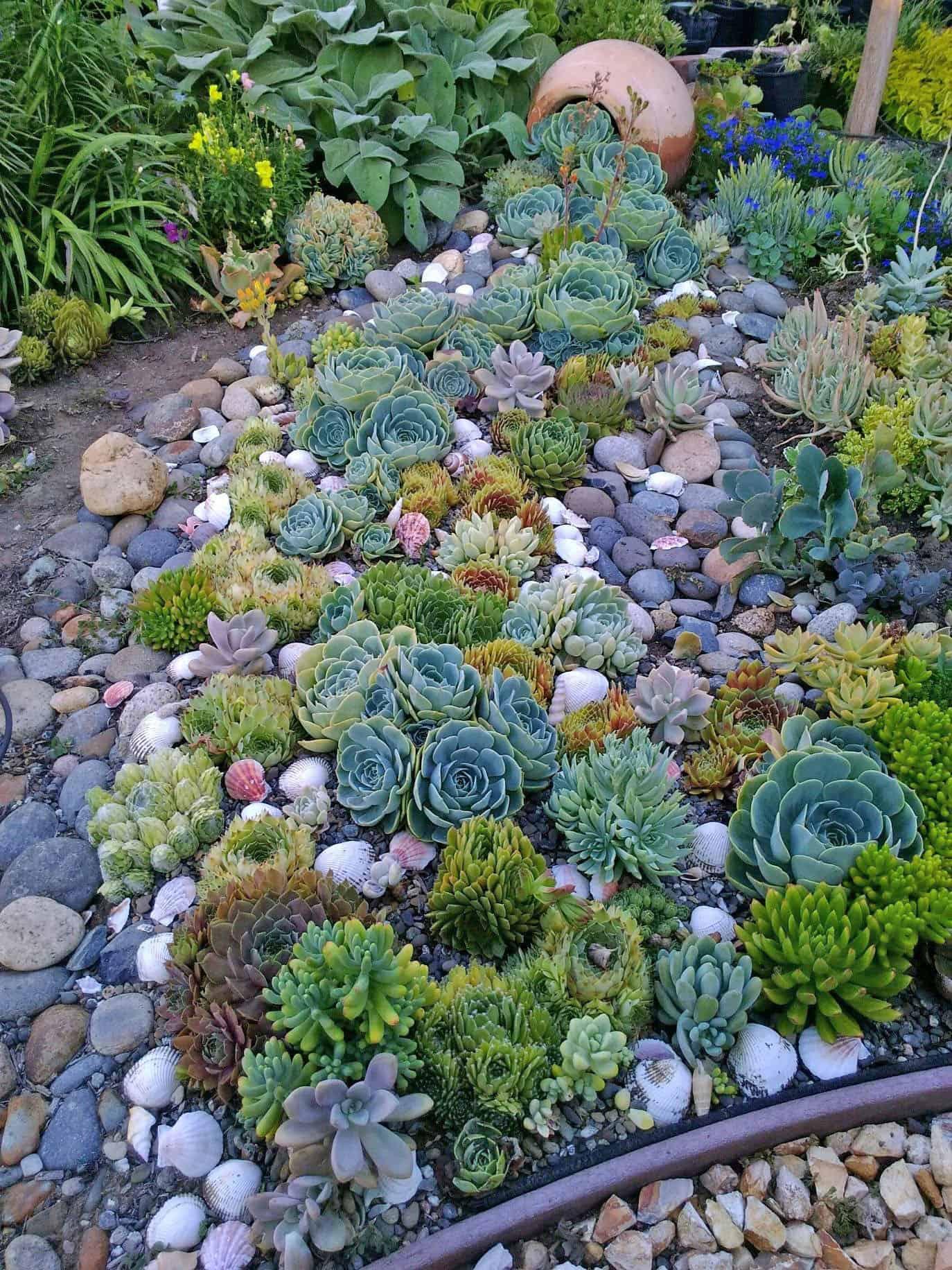 succulents-creek-bed