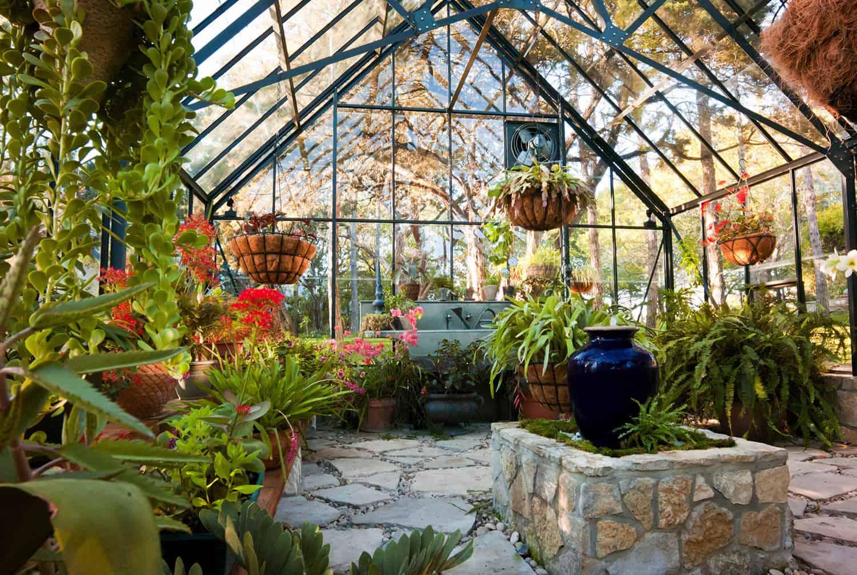 staklenik-s visećim biljkama