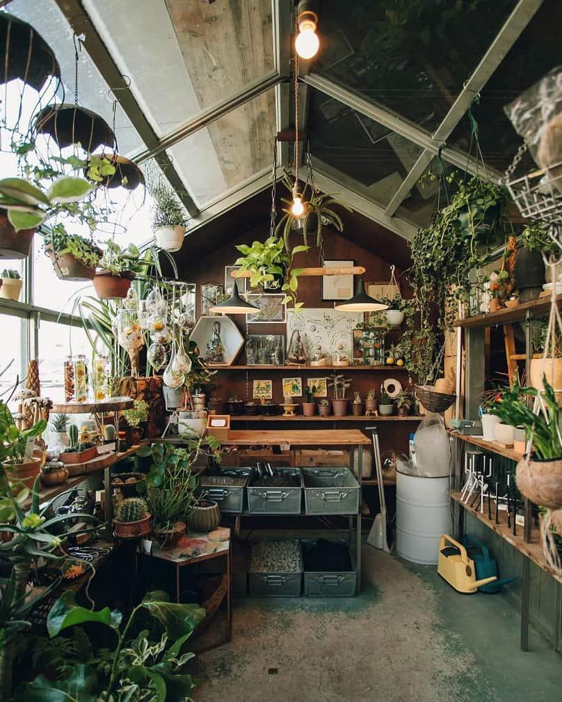 backyard-greenhouse