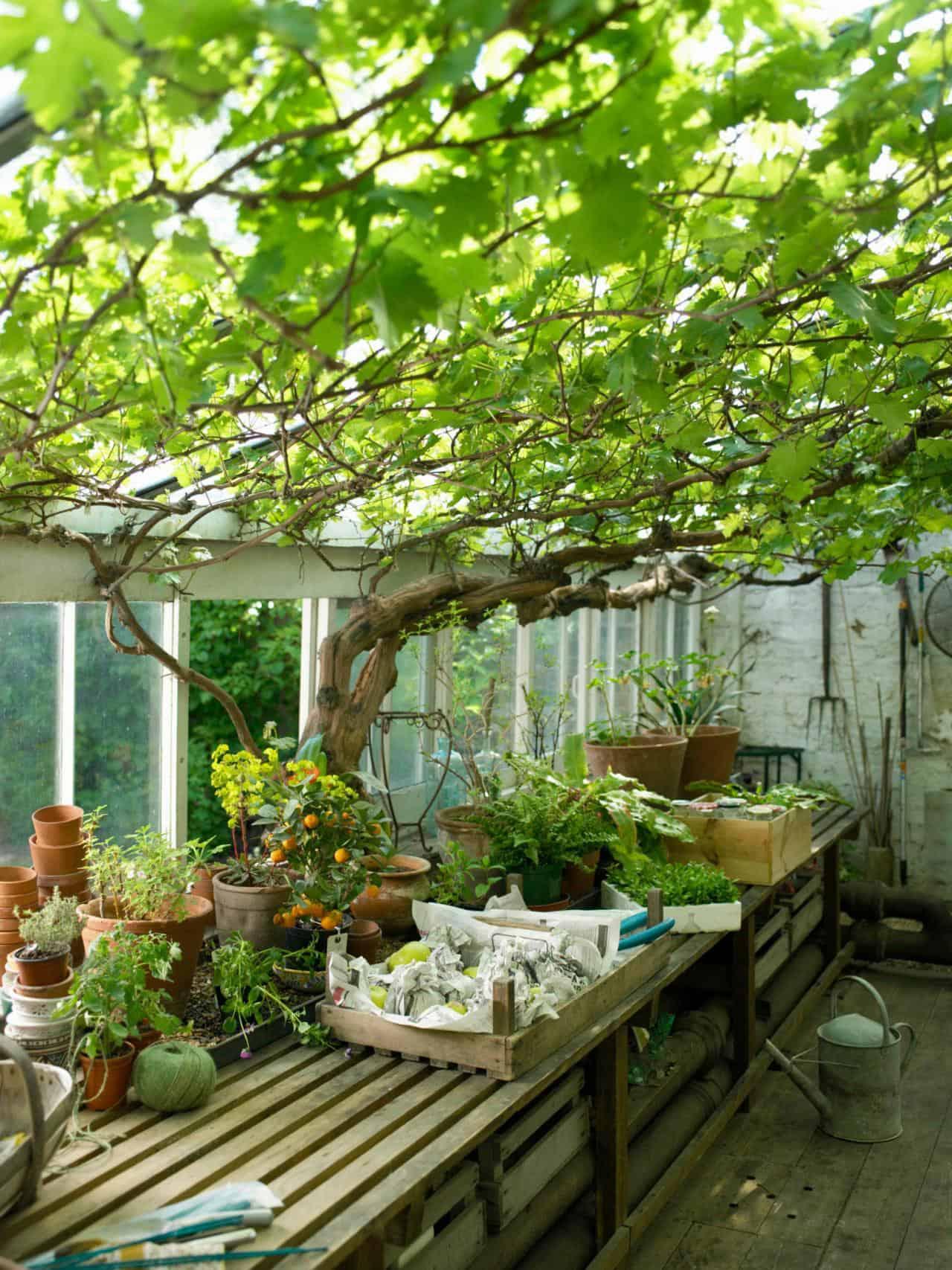 backyard-greenhouse-design
