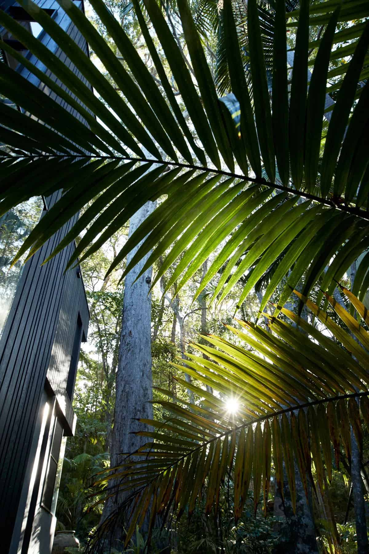 suvremena-prašuma-povlačenje-eksterijer