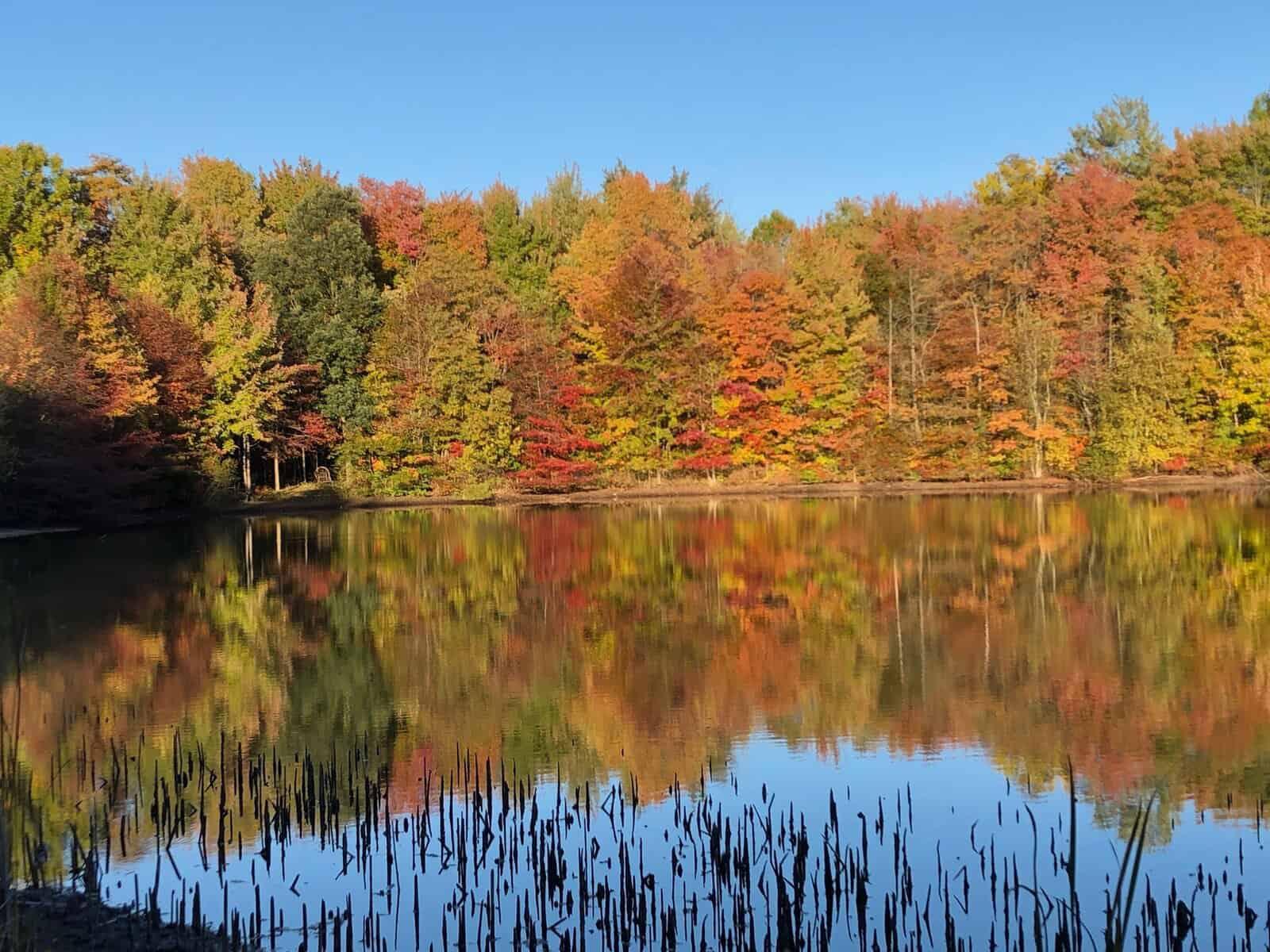 modern-woodland-retreat-exterior-lake-michigan-fall