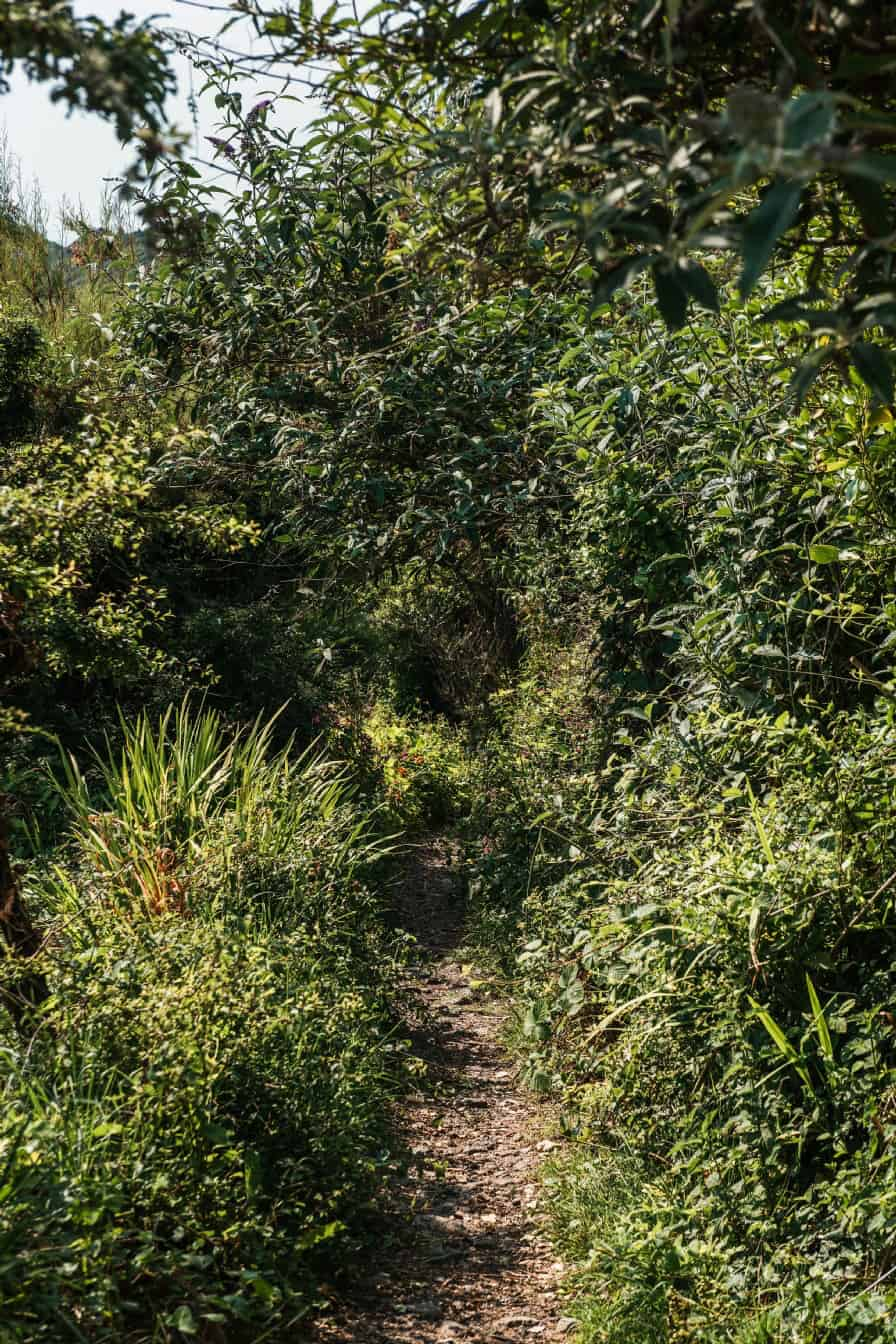 Coverack-Cornwall-forest