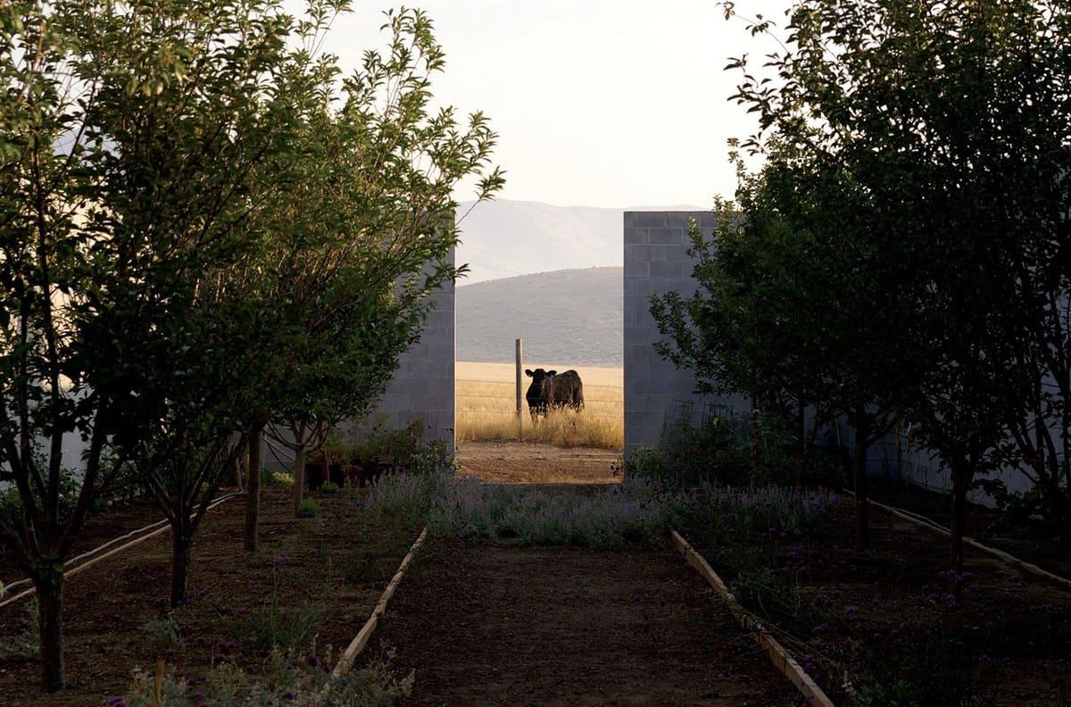 modern-desert-home-landscape
