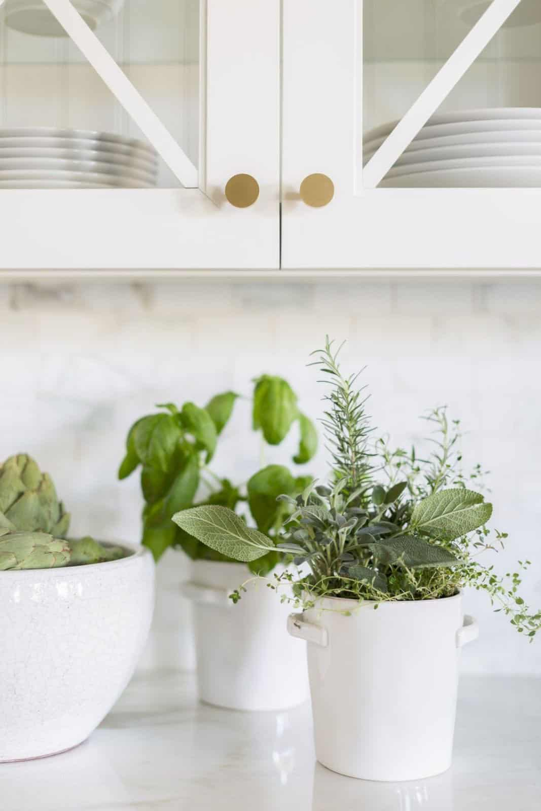 mediterranean-inspired-kitchen-countertop-detail-with-plants
